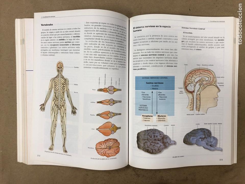 Libros de segunda mano: BIOLOGÍA - GEOLOGÍA. VV.AA. 1º BACHILLERATO. EDITA: EREIN 1997. 349 PÁGINAS. COMO NUEVO. - Foto 6 - 174898157