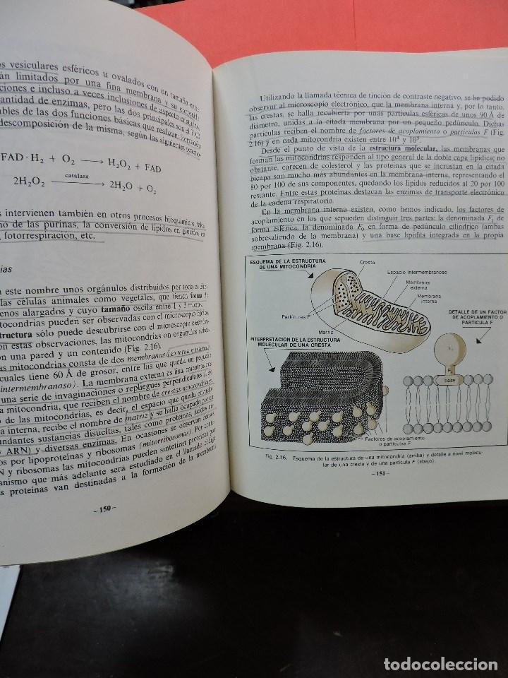 Libros de segunda mano: Biología COU. DUALDE PÉREZ, Vicente y DUALDE VIÑETA, Ana. Editorial ECIR 1987 - Foto 3 - 269029084