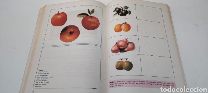 Libros: OBSERVÓ Y DIBUJO. Edelvives 6EGB - Foto 4 - 268743699