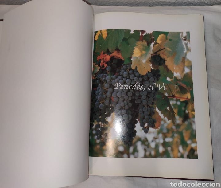 Libros: Libro - Penedès, el vi - P&R comunicacions - 1995 - EDICIONS I COMUNICACIÓ. Tapa dura, 168 págs - Foto 5 - 241039125