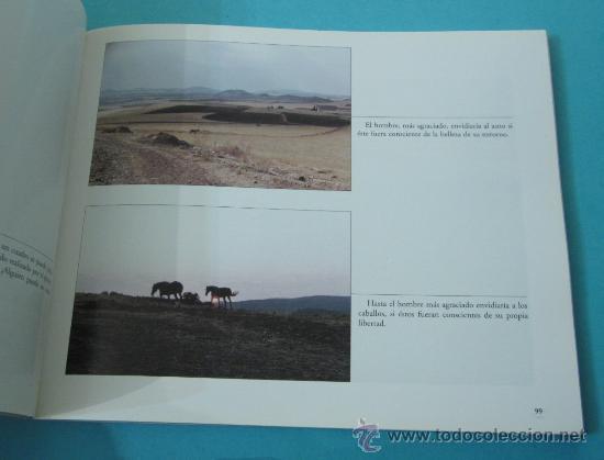 Libros: FOTOENSAYO Y FOTOPOESÍA DE NUESTRO TIEMPO. JUAN FRANCISCO JIMÉNEZ BORREGUERO - Foto 2 - 29312668
