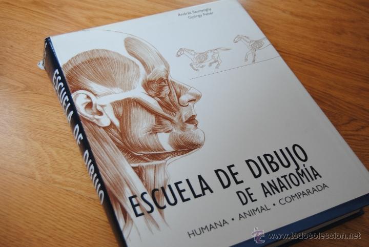 Moderno Clases De Dibujo De Anatomía Embellecimiento - Anatomía de ...