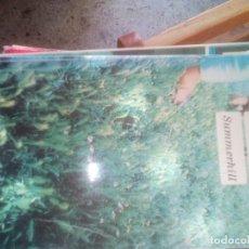 Libros: SUMMERHILL A.S. NEILL FONDO DE CULTURA ECONOMICA. Lote 112591159