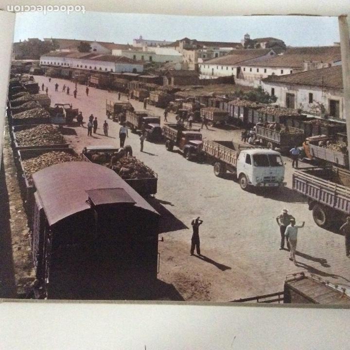 Libros: Ebro 50 años Compañís de Azúcares y Alcoholes Azucarera de Castilla Venta de Baños Palencia - Foto 4 - 149716102