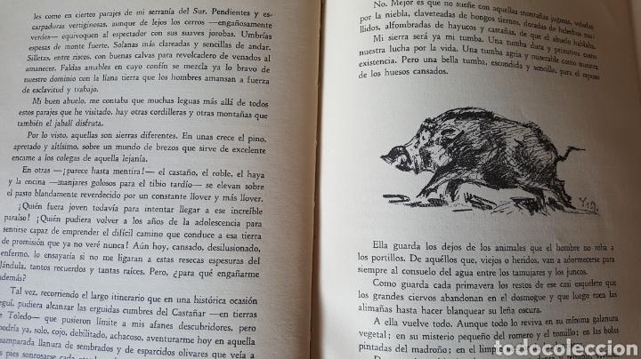 Libros: Solitario. Andanzas y meditaciones de un jabalí. Jaime de Foxá. Caza - Foto 4 - 194694250