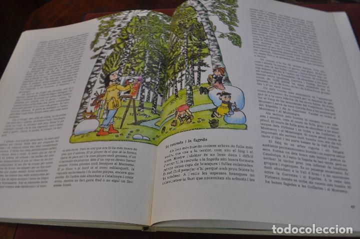 Libros: geografia de catalunya - josep mª panareda i pilarin bayés - col·lecció llavor any 1977 - IEB - Foto 2 - 179379646