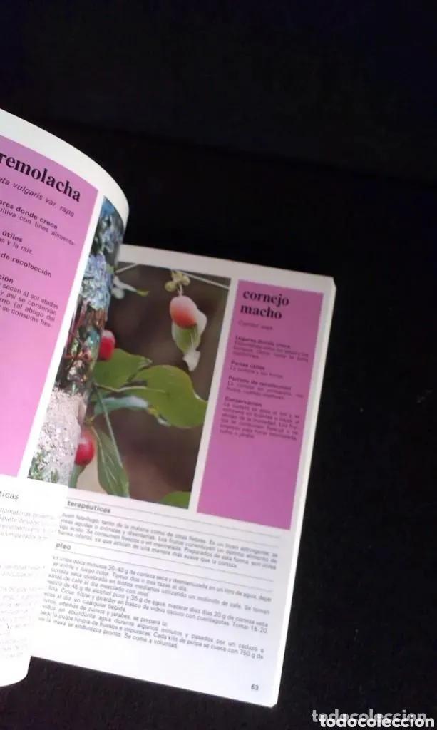 Libros: ALDO POLETTI : PLANTAS Y FLORES MEDICINALES - DOS TOMOS (PARRAMON, 1982 - Foto 4 - 182644797