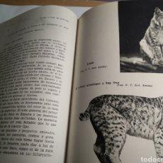 Libros: FAUNA Y CAZA DE MONTAÑA TOMO 2. Lote 191505038