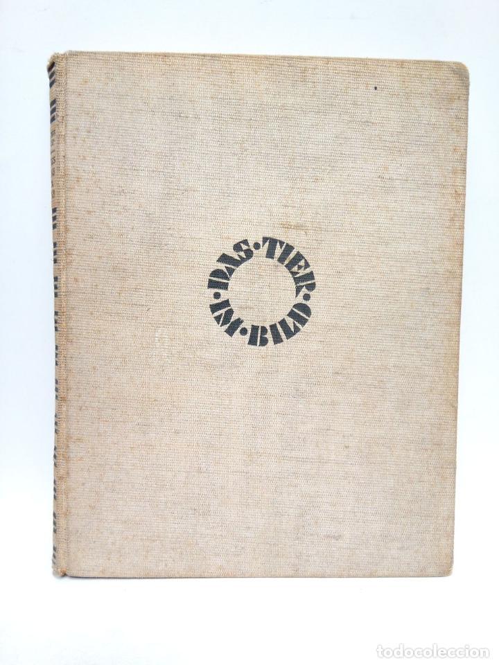 HEILBORN, DR. ADOLF - LIEBESSPIELE DER TIERE / TEXT UND AUSWAHL DER BILDTAFELN VO DR. ADOLF HEILBOR (Libros sin clasificar)