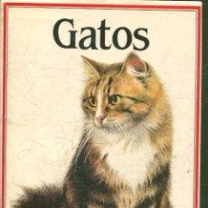 Libros: PINTERA, ALBERT. - GATOS.. Lote 195063553