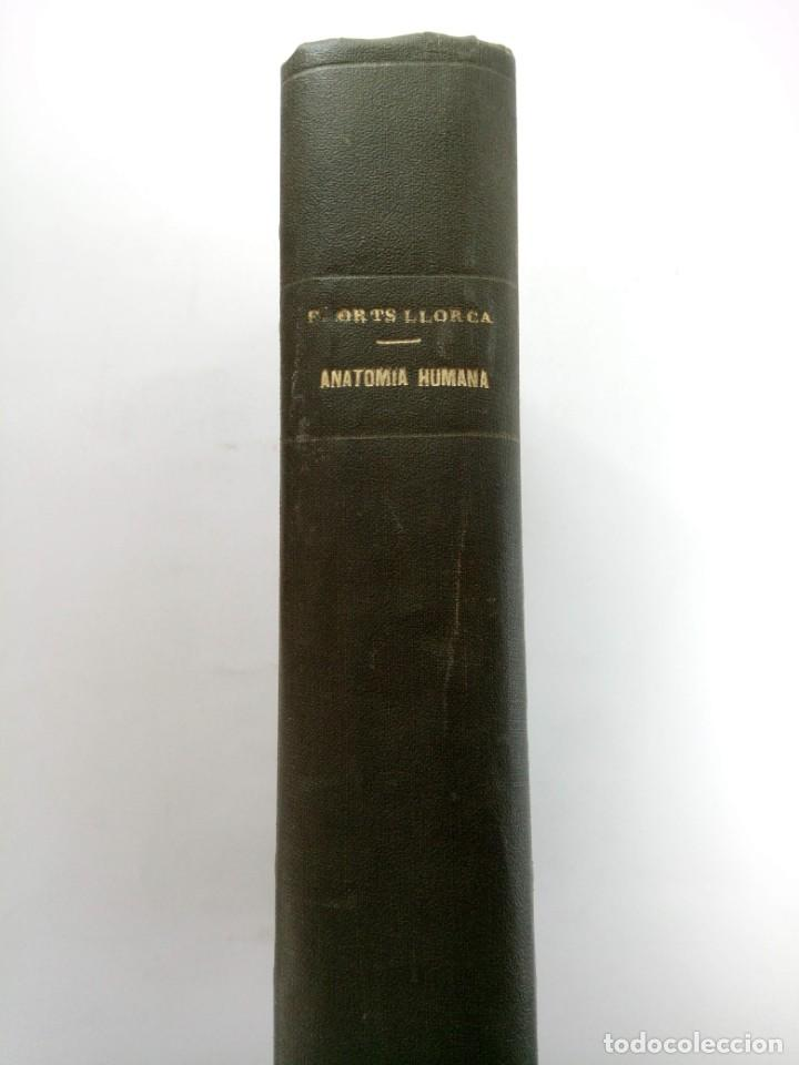 Libros: ANATOMIA HUMANA TOMO I - FRANCISCO ORTS LLORCA - EDITORIAL CIENTÍFICO-MÉDICA 1959 - Foto 4 - 218691535