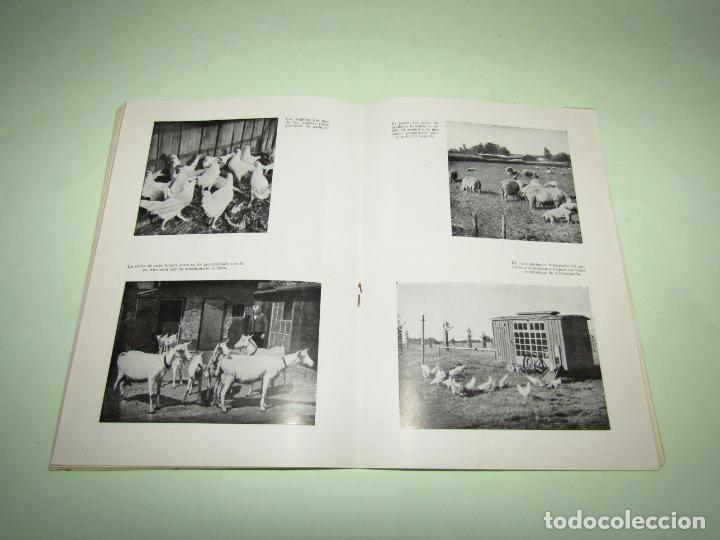 Libros: ELEVACION DEL RENDIMIENTO EN LA CRIA DE GANADO. UN PROBLEMA EUROPEO. Folleto de 1940 - Foto 3 - 234929905