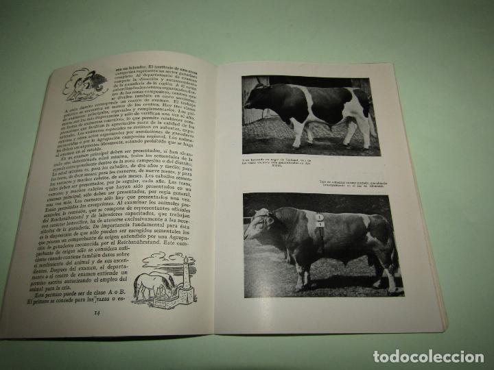 Libros: ELEVACION DEL RENDIMIENTO EN LA CRIA DE GANADO. UN PROBLEMA EUROPEO. Folleto de 1940 - Foto 4 - 234929905