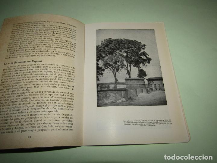 Libros: ELEVACION DEL RENDIMIENTO EN LA CRIA DE GANADO. UN PROBLEMA EUROPEO. Folleto de 1940 - Foto 6 - 234929905