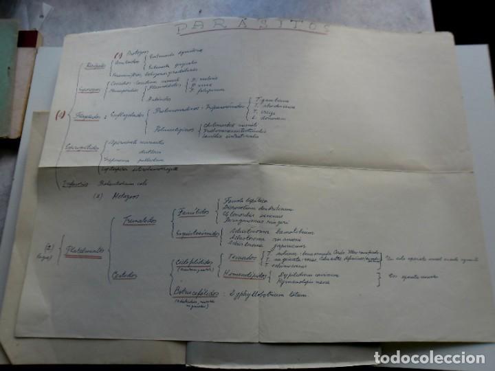 Libros: 185,, BIOLOGIA DE LOS PARASITOS DEL HOMBRE. LUIS IGLESIA IGLESIAS. CON 181 GRABADOS, 2º. EDICION. - Foto 3 - 269378613