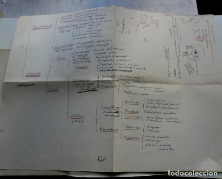 Libros: 185,, BIOLOGIA DE LOS PARASITOS DEL HOMBRE. LUIS IGLESIA IGLESIAS. CON 181 GRABADOS, 2º. EDICION. - Foto 4 - 269378613