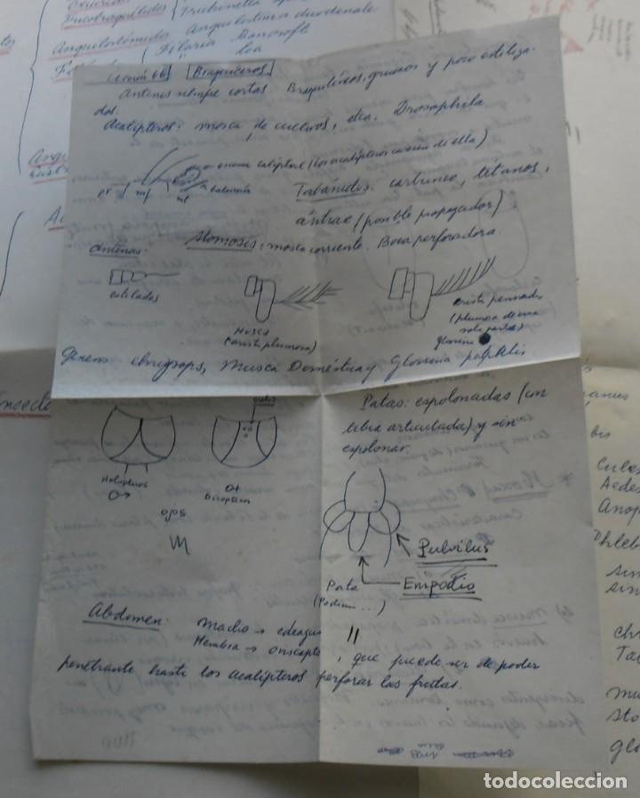 Libros: 185,, BIOLOGIA DE LOS PARASITOS DEL HOMBRE. LUIS IGLESIA IGLESIAS. CON 181 GRABADOS, 2º. EDICION. - Foto 6 - 269378613