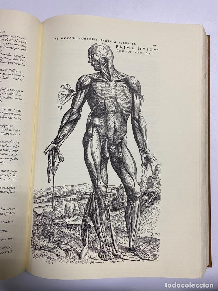 Manuscritos antiguos: HUMANI CORPORIS FABRICA. ANDRE VESALE. FACSIMIL DEL EJEMPLAR Nº 224. VER FOTOS - Foto 15 - 243547935