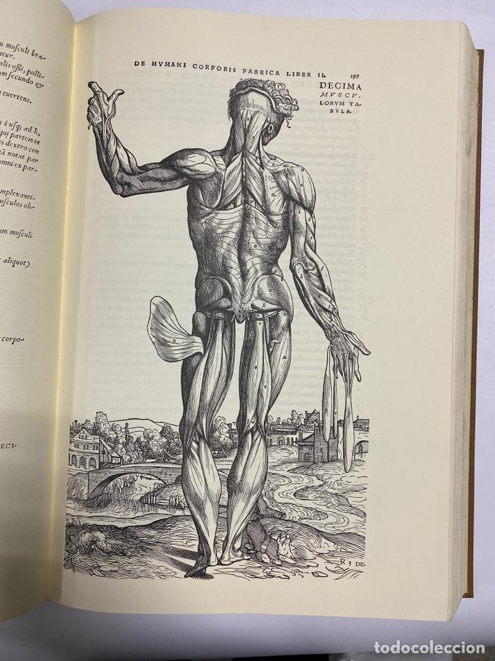 Manuscritos antiguos: HUMANI CORPORIS FABRICA. ANDRE VESALE. FACSIMIL DEL EJEMPLAR Nº 224. VER FOTOS - Foto 16 - 243547935
