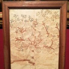 Manuscritos antiguos: ÁRBOL GENEALÓGICO FAMILIA CARBONELL. S.XVIII.. Lote 254969930