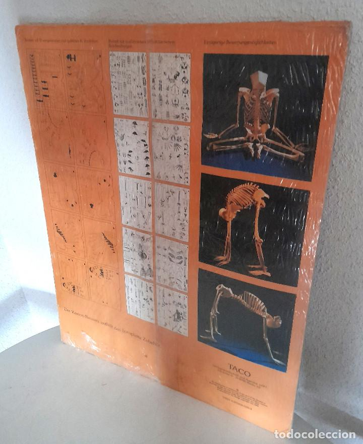 Maquetas: Maqueta Anatomía El esqueleto humano completo tamaño natural sin estrenar cartón Alemania TACO - Foto 2 - 269204968