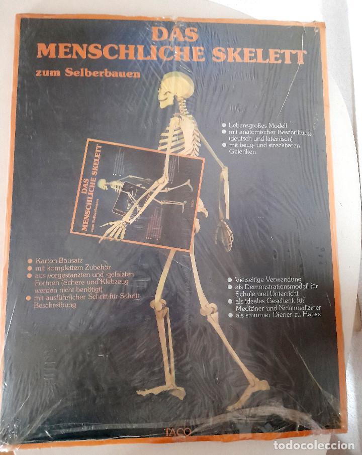 Maquetas: Maqueta Anatomía El esqueleto humano completo tamaño natural sin estrenar cartón Alemania TACO - Foto 4 - 269204968