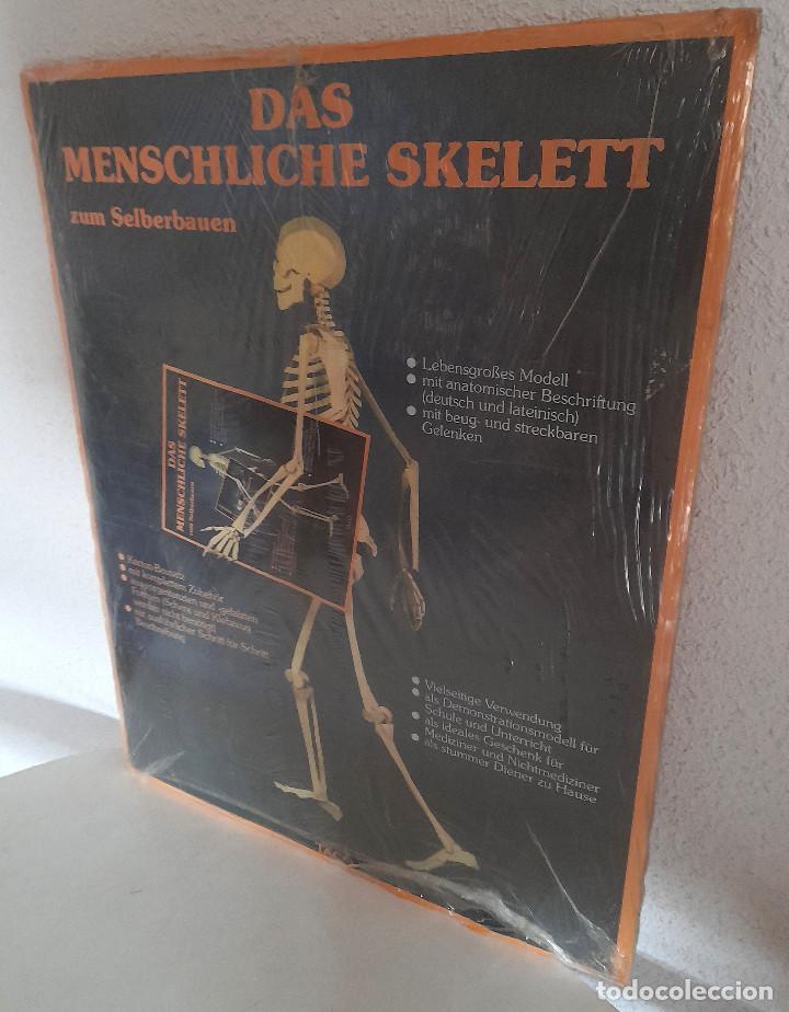 Maquetas: Maqueta Anatomía El esqueleto humano completo tamaño natural sin estrenar cartón Alemania TACO - Foto 5 - 269204968