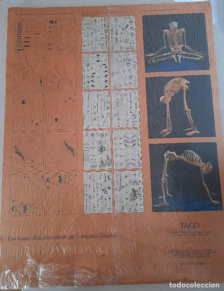 Maquetas: Maqueta Anatomía El esqueleto humano completo tamaño natural sin estrenar cartón Alemania TACO - Foto 11 - 269204968