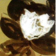 Coleccionismo Marcapáginas: MARCAPÁGINAS SINDICATO CCOO SABADELL – SANT JORDI 2004. Lote 113390126
