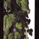 Coleccionismo Marcapáginas: MARCAPAGINAS IMPEDIMENTA: LA HIJA DE ROBERT POSTE . Lote 161377080