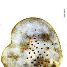 Coleccionismo Marcapáginas: MARCAPÁGINAS: KALANDRAKA - POSTAL. Lote 229115730