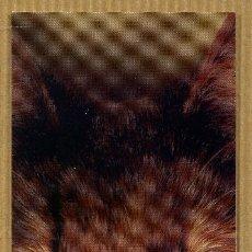 Coleccionismo Marcapáginas: MARCAPÁGINAS EDITORIAL SALAMANDRA Nº 354. Lote 198652653