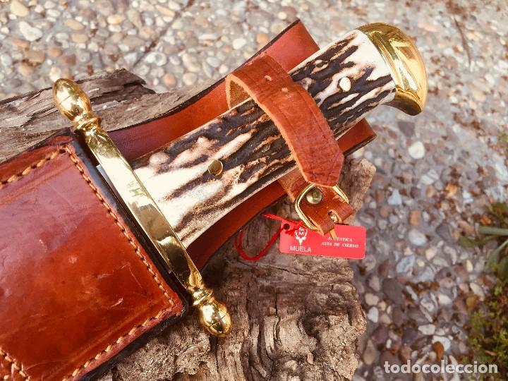Militaria: Cuchillo Muela Podenquero - Foto 3 - 206325581
