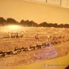 Militaria: FOTOGRAFÍA ANTIGUA. LEGIONARIOS EN EL CAMPO DE TIRO, 1971. PÁGINA DE PRENSA, ENMARCABLE.. Lote 27377367