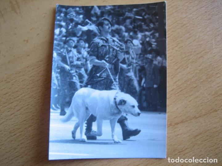 Militaria: Fotografía guerrillero COES. Desfile de la Victoria Madrid - Foto 2 - 82228052