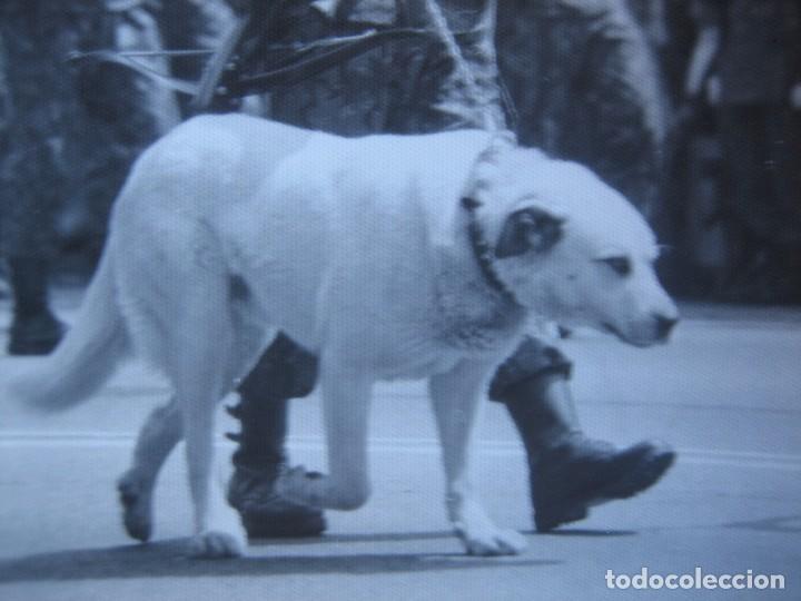 Militaria: Fotografía guerrillero COES. Desfile de la Victoria Madrid - Foto 5 - 82228052