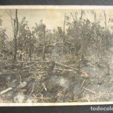 Militaria: TANQUE NAZI PANZER DESTRUÍDO EN MITAD DEL BOSQUE. ALEMANIA NAZI. II GUERRA MUNDIAL. . Lote 176017085