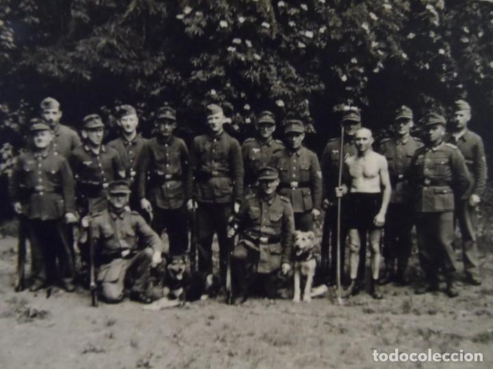 GEBIRGSJÄGER CONDECORADOS DE LA WEHRMACHT CON PERROS PASTORES. AÑOS 1939-45 (Militar - Fotografía Militar - II Guerra Mundial)