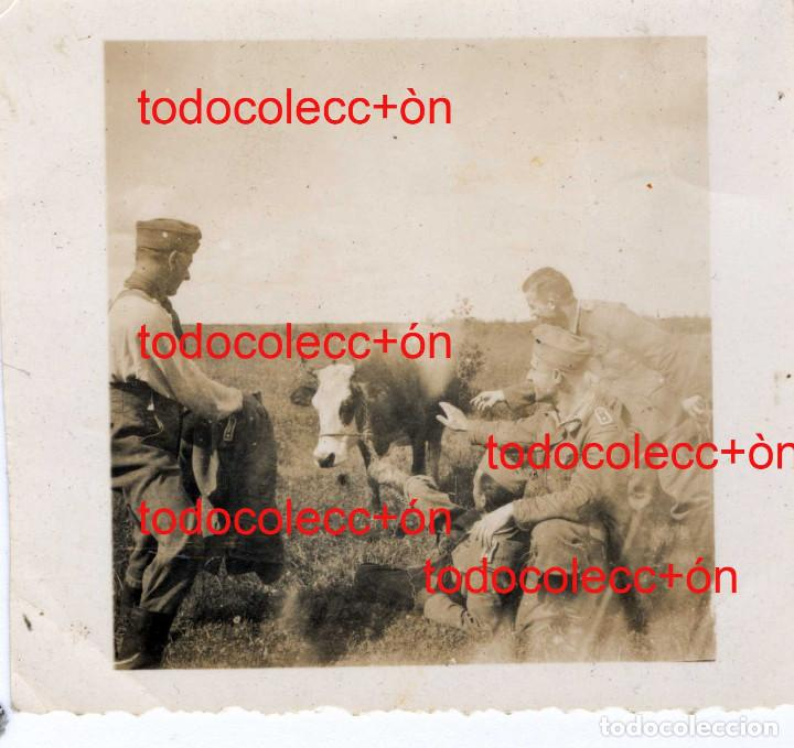 + DIVISION AZUL. SOLDADO TOREANDO UNA VACA. LEER BIEN LA DESCRIPCION (Militar - Fotografía Militar - II Guerra Mundial)