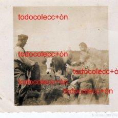 Militaria: + DIVISION AZUL. SOLDADO TOREANDO UNA VACA. LEER BIEN LA DESCRIPCION. Lote 206246012
