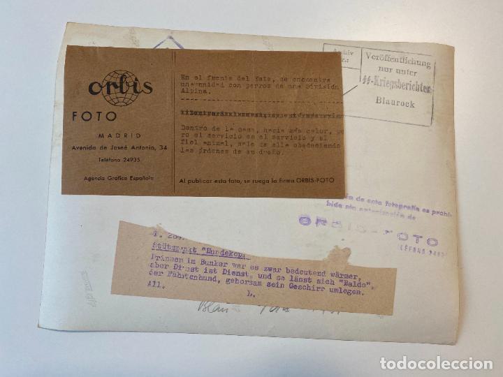 Militaria: FOTOGRAFIA DE PRENSA WWII , ALEMANIA , PRESS PHOTO , 2 GUERRA MUNDIAL 24 x 18 cm - Foto 2 - 234567435