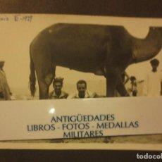 Militaria: MELILLA TILIUIN VI -1939 POST GUERRA CIVIL OFICIALES OFICIALES LEGION CON CAMELLO. Lote 122048947