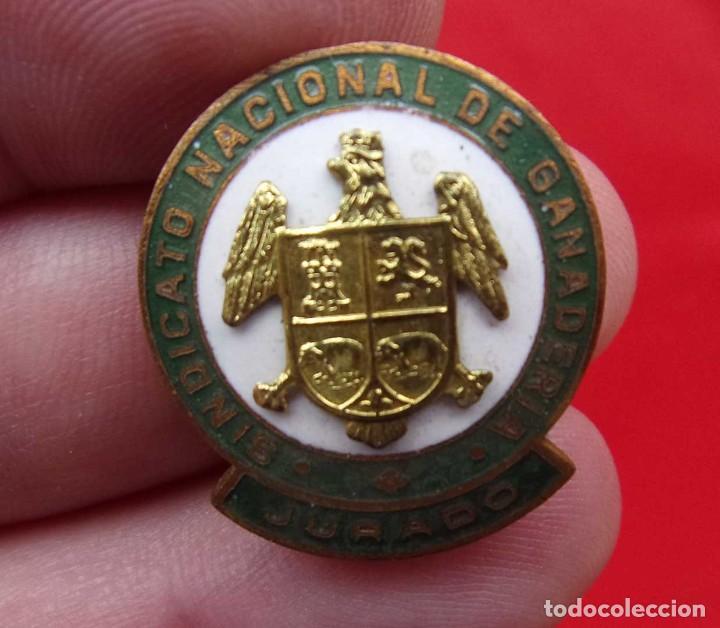 INSIGNIA OJAL. SINDICATO NACIONAL DE GANADERÍA. JURADO. ÚNICA EN TC. ÉPOCA DE FRANCO. PIN. (Militar - Insignias Militares Internacionales y Pins)
