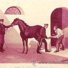 Militaria: DIAPOSITIVA DEL EJERCITO Y ARMADA DE ESPAÑA AÑO 1884 Nº17. Lote 14005147