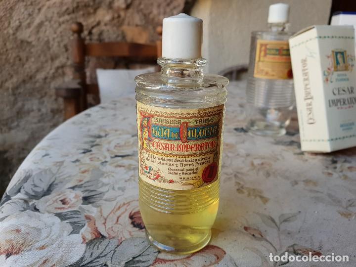 CESAR IMPERATOR 13 CM (Coleccionismo - Miniaturas de Perfumes)