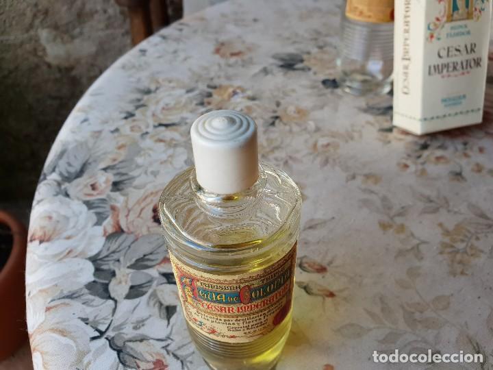 Miniaturas de perfumes antiguos: CESAR IMPERATOR 13 CM - Foto 3 - 190067976