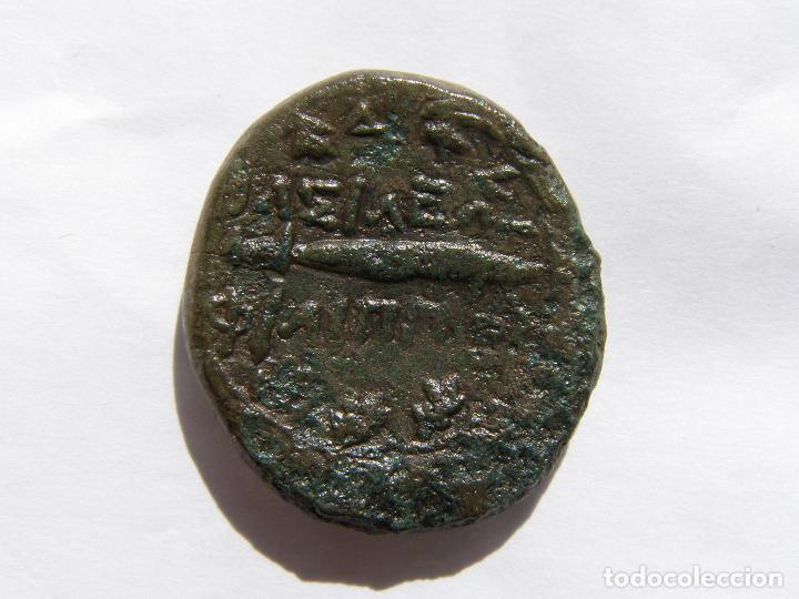 Monedas Grecia Antigua: REINO DE MACEDONIA.FILIPO V. DOBLE UNIDAD. BRONCE MEDIANO. SIGLO III AC - Foto 2 - 218579745