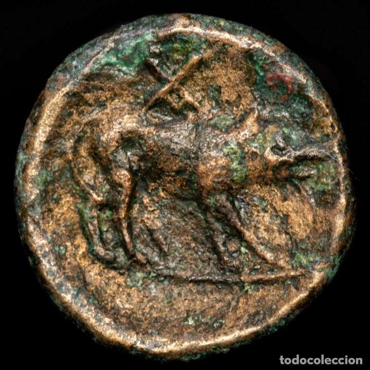 Monedas Grecia Antigua: Lucania, Paestum-Poseidonia - Æ 17 Persefone / Cerdo. - Foto 2 - 222786805