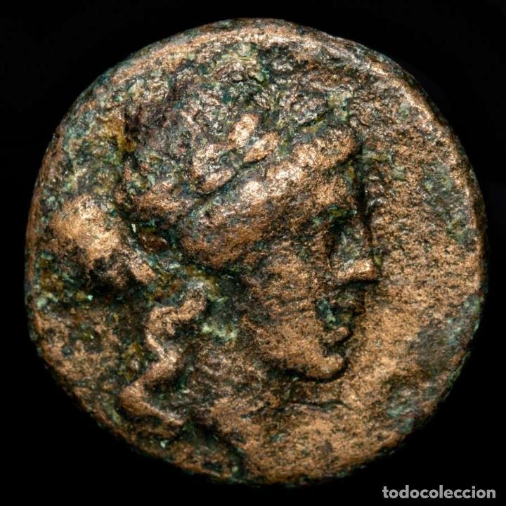 LUCANIA, PAESTUM-POSEIDONIA - Æ 17 PERSEFONE / CERDO. (Numismática - Periodo Antiguo - Grecia Antigua)