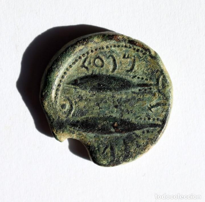 PRECIOSO AS GADES / GADIR CADIZ 100-20 A.C. (Numismática - Hispania Antigua - Moneda Ibérica no Romanas)